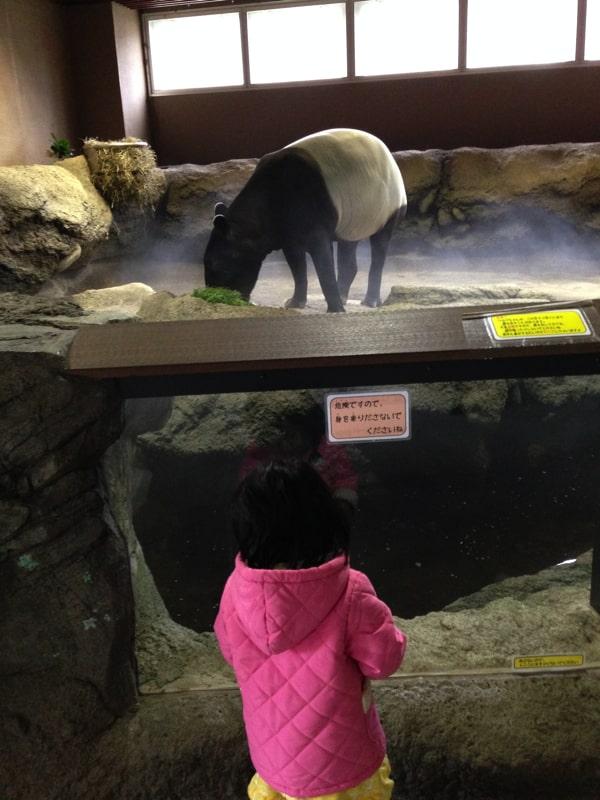 円山動物園でアリクイを見る子ども
